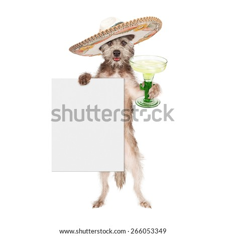 Happy and smiling dog celebrating Cinco De Mayo wearing a big Mexican sombrero and holding a margarita and blank white sign - stock photo