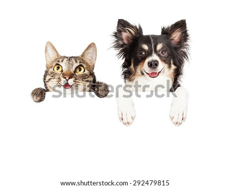 Happy and smiling tabby cat and Chihuahua crossbreed dog with paws over a blank sign - stock photo