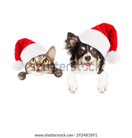 Happy and smiling tabby cat and Chihuahua crossbreed dog with paws over a blank sign wearing Christmas Santa Claus hats