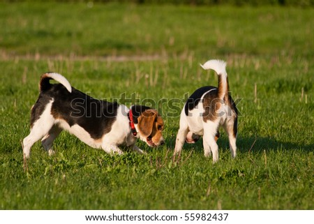 Happy beagle dogs in a park - stock photo