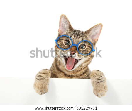 Happy bengal cat wearing glasses looking over a sign - stock photo