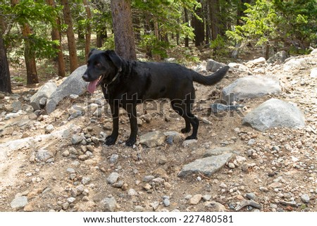 Happy Black Dog in the Woods - stock photo