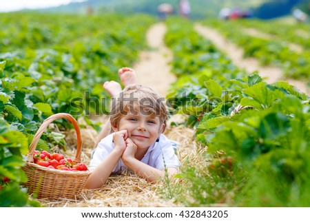 Happy blond preschoool little kid boy picking and eating strawberries on organic bio berry farm in summer, on warm sunny day. Harvest fields in Europe. - stock photo