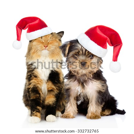 Happy cat and puppy in red christmas hats sitting together. isolated on white background.