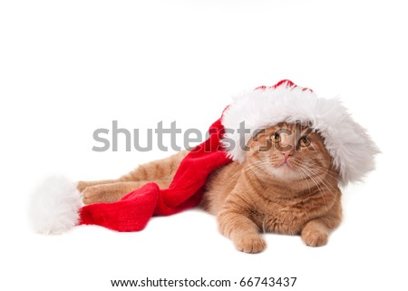 Happy cat in Christmas hat - stock photo