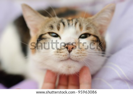 Happy cat is pleased with hand stroking - stock photo