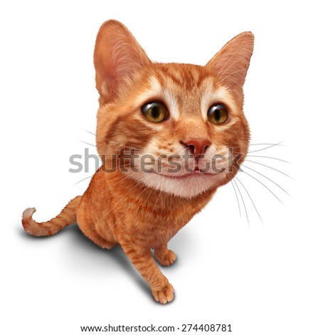Happy cat on a white background as a cute orange tabby kitty with a smile in forced perspective as a symbol of pet care or veterinary health. - stock photo