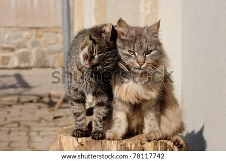 happy cats - stock photo