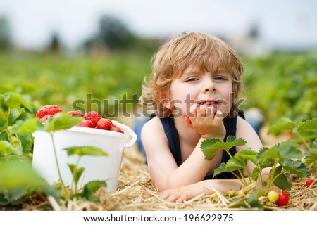Happy caucasian little boy picking and eating strawberries on berry farm in summer - stock photo