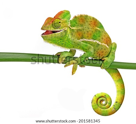 happy chameleon - stock photo