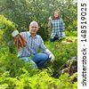 Happy couple  harvesting carrots in field - stock photo