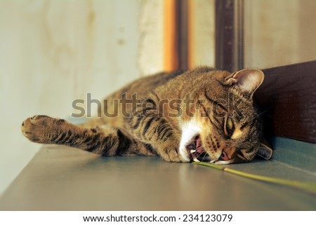 Happy curious cute cat playing - stock photo