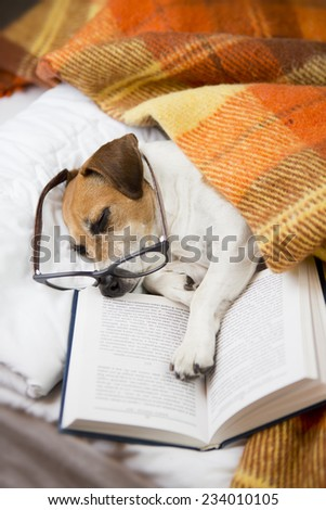 Happy cute dog with reading glasses fell asleep in a comfortable bed with a book