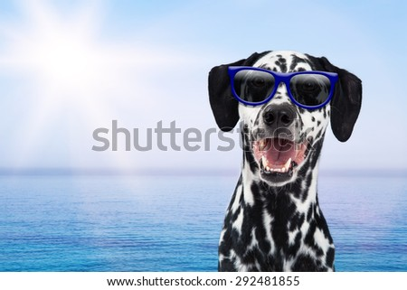 Happy Dalmatian breed dog on vacation wearing sunglasses with sunshine and a blue ocean in the background - stock photo