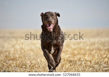 Brown dog Stock Photos, Illustrations, and Vector Art