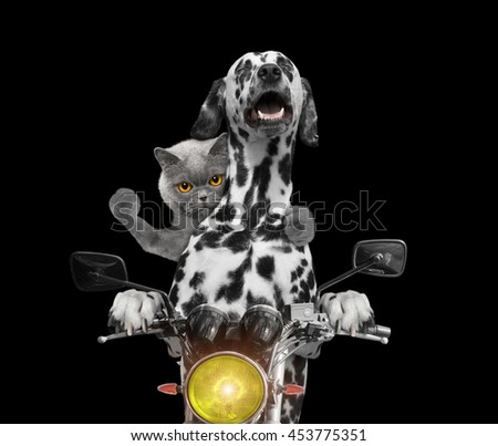 happy dog and cat ride on a motorcycle -- isolated on black - stock photo
