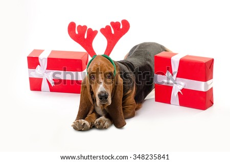 Happy dog Basset Hound with deer horns on his had and Christmas gifts - stock photo