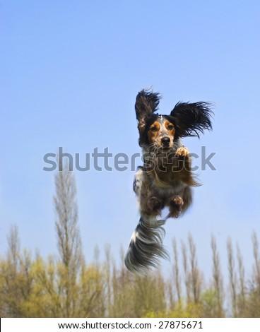 Happy dog caught in flight - stock photo