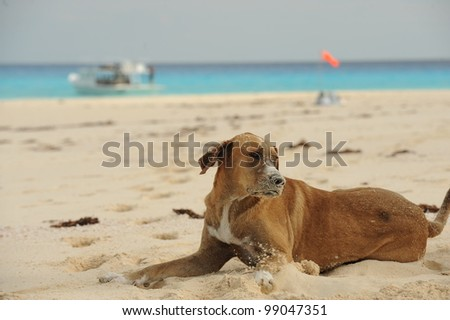 Happy dog covered in sand on beach - stock photo