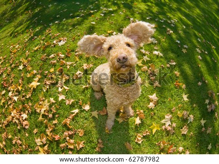 Happy dog flapping his ears - stock photo