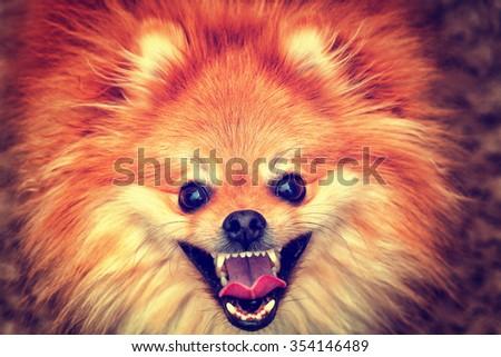 Happy dog groomed home - stock photo