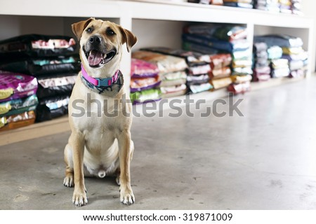 Happy dog in pet store - stock photo