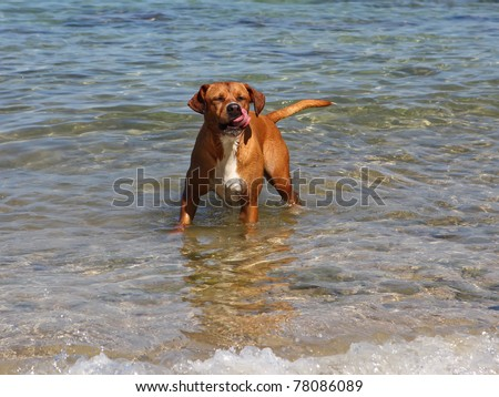 happy dog in water - stock photo