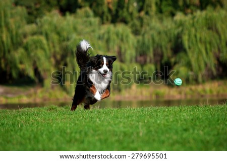 happy dog jumping running at summer road