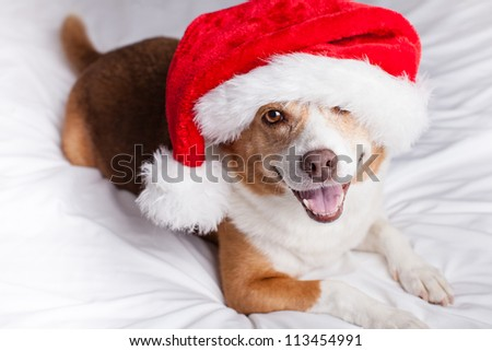 Happy Dog looking at camera with a Santa Hat on - stock photo