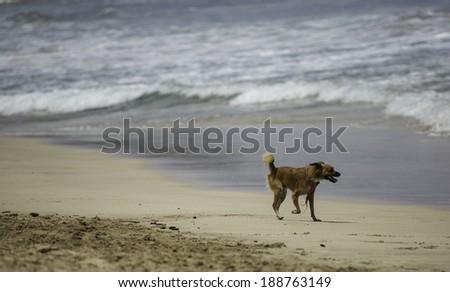 Happy Dog on Beach - stock photo