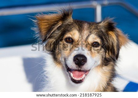 Happy dog on boat - stock photo