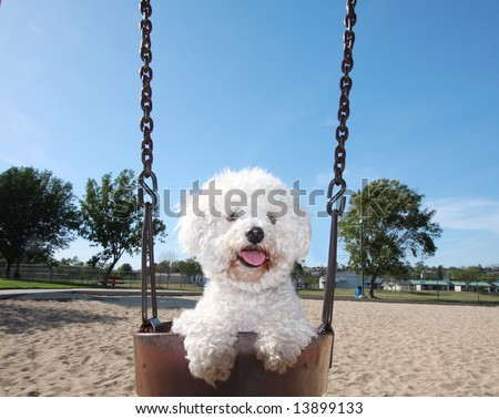 Happy Dog On Park Swing - stock photo