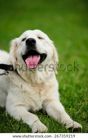 happy dog on the green blurred background - stock photo