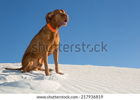 happy dog outdoors sitting in white sand with blue sky in background - stock photo