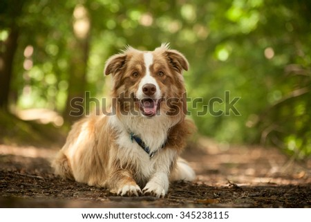Happy dog photographed outside in the forest - stock photo