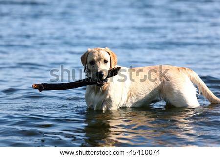 happy dog play - stock photo