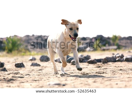 happy dog play on the ground - stock photo