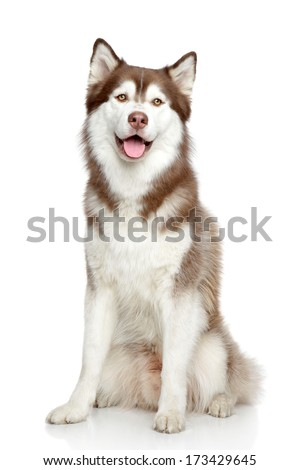 Happy dog, studio portrait on white background - stock photo