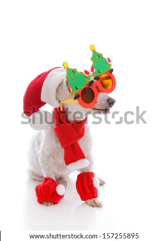 Happy dog wearing a santa hat, comical Christmas glasses and scarf and leggings - stock photo