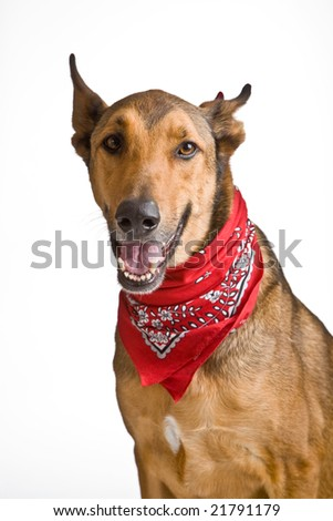 Happy dog with red cloak - stock photo