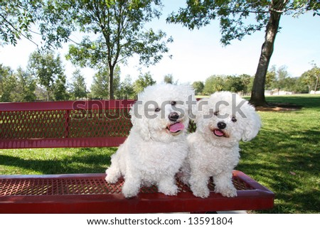 Happy Dogs Posing On Park Bench - stock photo