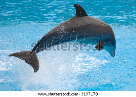 Happy dolphin is jumping out of the water - stock photo