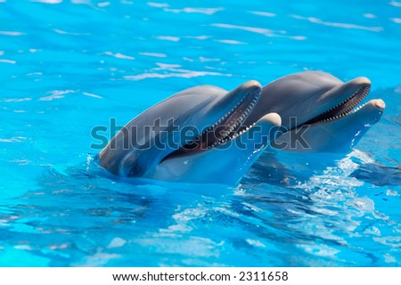 Happy dolphins in the blue water of the swimming pool - stock photo