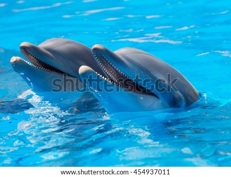 Aileron Stock Images Royalty Free Images Amp Vectors