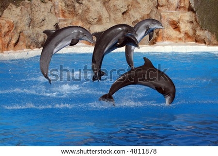 happy dolphins jumping out of the water - stock photo
