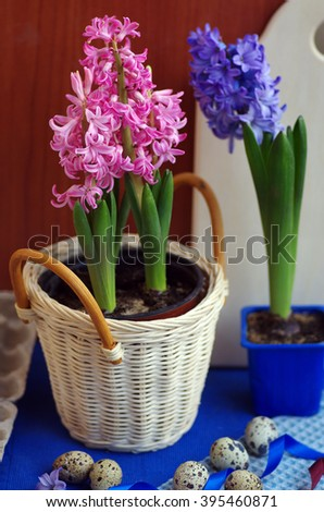Happy Easter. A colorful hyacinth and quail eggs