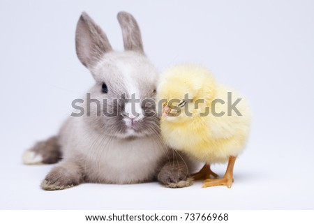 Happy Easter animal, Rabbit on chick - stock photo