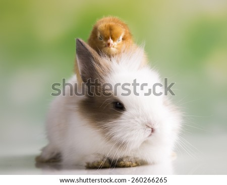 Happy Easter. Chickens in bunny