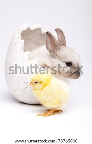 Happy Easter. Chickens in bunny - stock photo