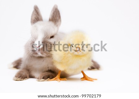 Happy Easter, Chickens in bunny - stock photo